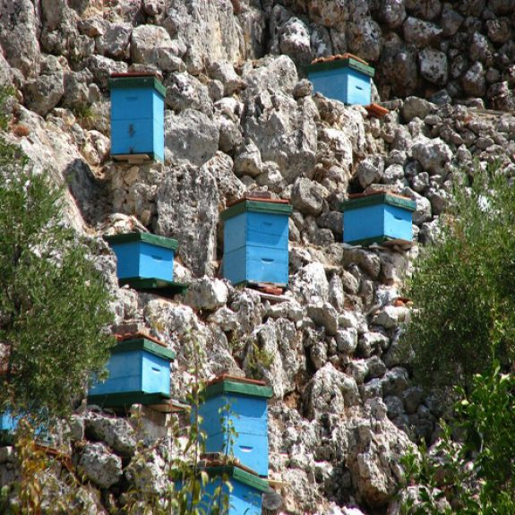 Blue wooden bee hives in the cliffs of Paxos