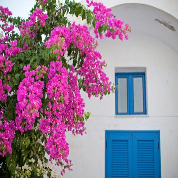 yellow house with pink bougainvillea, green door and large Greek pot outside, the house is in dappled shade